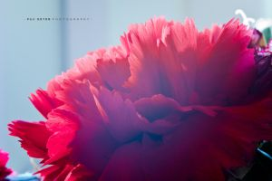 red petals by funkl