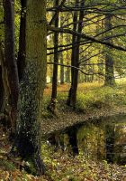 Pond Of Autumn Light by wormwood-doll