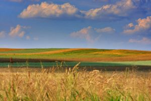 Grassland by paulynapl