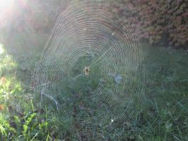 Spider's Web (1) by damekage
