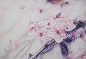Almond flowers by LOVE--WING