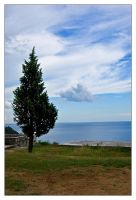 Tree and cloud by Grofica