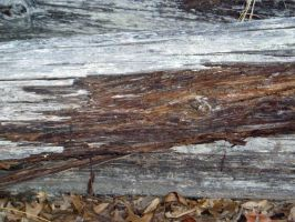 Wood Texture3 by nitch-stock