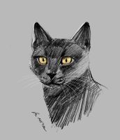 mandatory daily cat sketch 1605 by nosoart