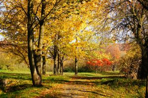 Herbstspaziergang by Olivia741