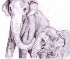 Elephants by Littlenene