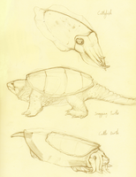Cuttle turtle by goosechimera