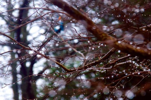 Droplets by votra