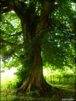 magical tree by Estruda