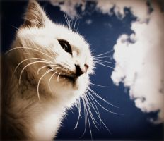 when i look to the sky. by GemmaZ
