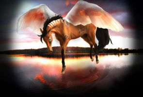 On an Angel's Wing by EnviousHorse