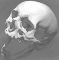 Skull Drawing by TristanBerndtArt