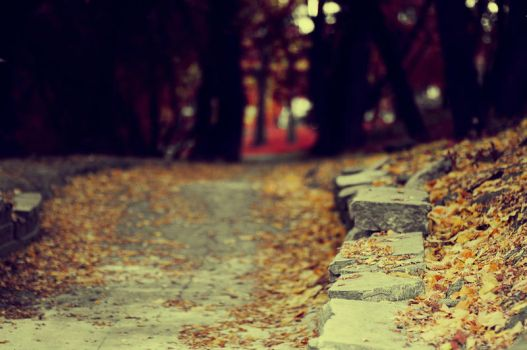Fallen Leaves On The Ground by beyondimpression