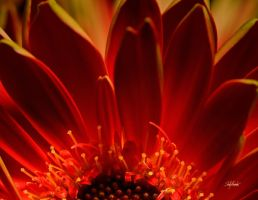 Floral in Color - Aug by UrbanRural-Photo