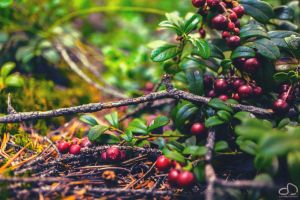 Large Berries in a Small World by DDKonstantinov