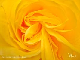 folded rose by ilura-menday-less