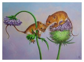 Harvest Mice by IreneShpak