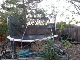 Go Home Trampoline, You Are Drunk by Allison-beriyani
