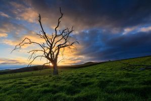 A Dead tree and a Star burst by carlosthe
