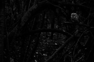 In a dark and lonely forest... by DaredevilTaoist