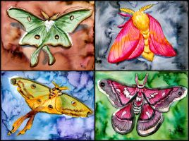 Moths by Verdego