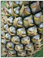 Details of a pineapple by moroka