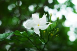 white color flower by reiime
