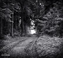 The road in the forest by orlibraorli