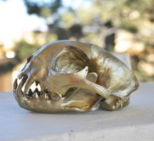 The Golden Bobcat - Hand Made Replica Skull by MorRokko