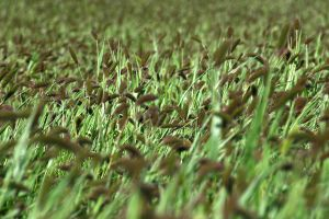 Field 07 by mordoc-stock