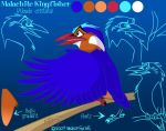 Malachite Kingfisher concept by julianwilbury