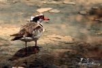 Red Contrast by OutbackReality