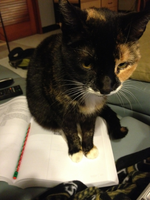 my cat is sitting on my homework by Enterran-Sago