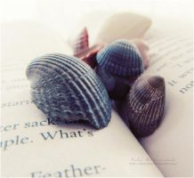 Shells by NelEilis