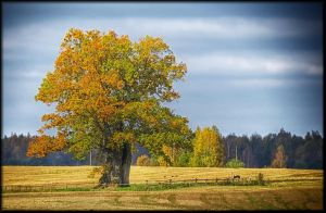 Old and lonely... by Yancis