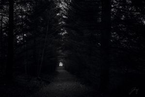 Forest Path by Jorgipie