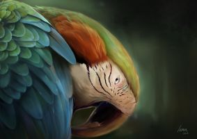Digital Painting_Animal_Parrot by LemonKudamono