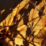 Ombres et Toile d'Automne I by hyneige