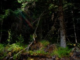 The Dark Forest by Whisperwings