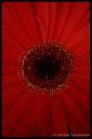 red flower by Sapka