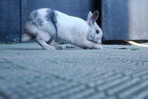 Ancord the rabbit 17 by Panopticon-Stock