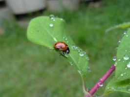 Coccinnelle 15 by eco6org