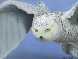 Snowy Owl by LilAngelWings014