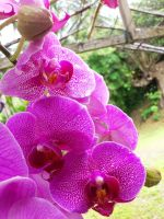 heavenly orchids by plainordinary1