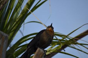 Bird in the Palm Trees 1 by KevinMcNeff