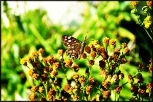 Butterfly. by FlashOfGrey