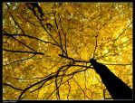 Leaves of Yellow by mrsselfdestruct