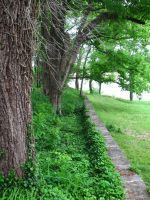 Hedge and Wall - Stock by Desperation-Stock