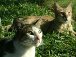 Two Cats by jeanleyva