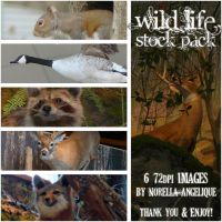 Wild Life Stock Pack by angellella-stock